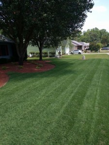 Lawn Care for North Carolina Lawns